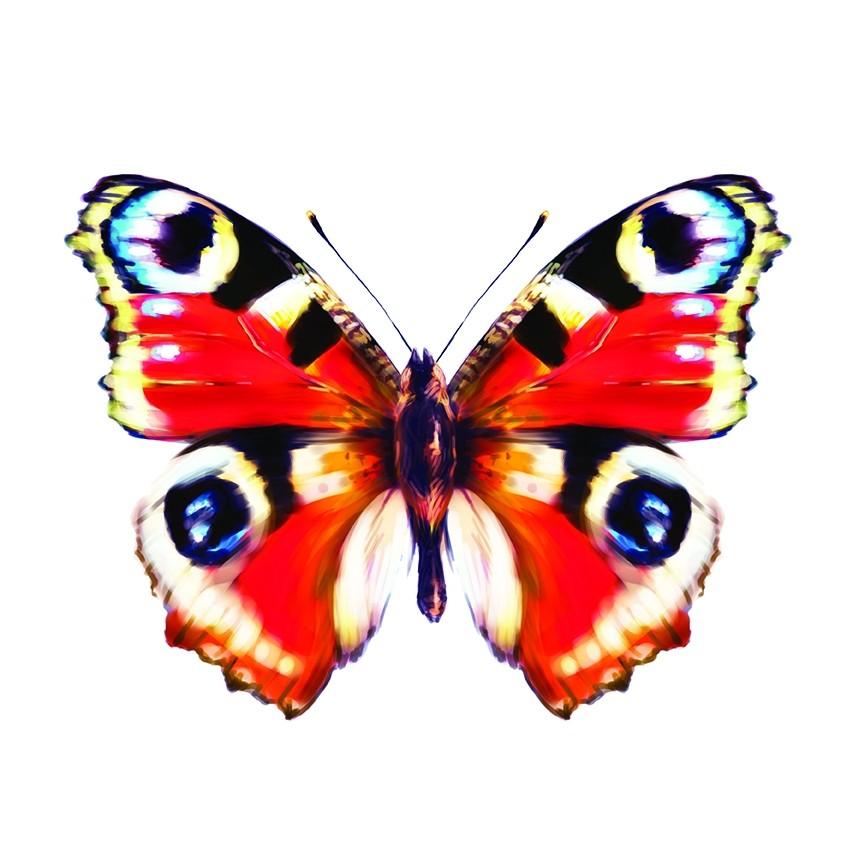 Porozmawiajmy O Motylach Czasopismo Wychowanie W